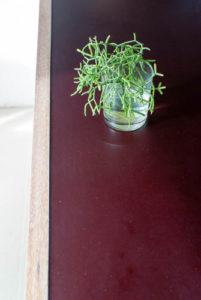 werblad-met-plant